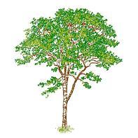Árboles y Plantas – CadBloques.com
