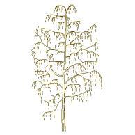 tree_elev14