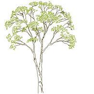 tree_elev2