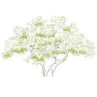 tree_elev3